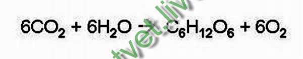 вести химическая формула фотосинтеза ломает кресты
