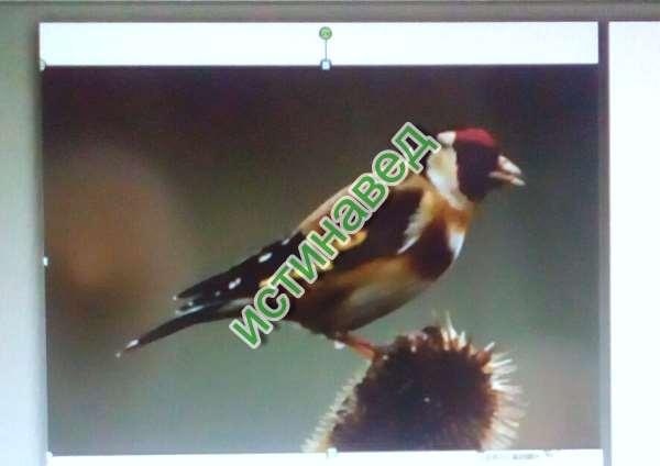 Эта птичка называется ЩЕГОЛ